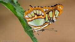Earnley Butterflies and Gardens