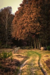 Autumn scene..
