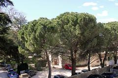 Vue sur les pins depuis gite le ventoux montelimar