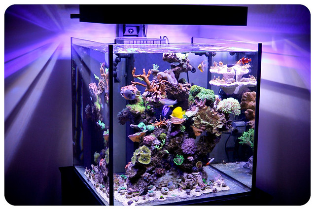 150 Gallon Cube Aquarium