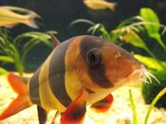 heres lookin at you fish