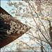 いつのまにか春の色 by 陸奥A子