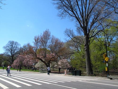 Spring in Central Park!