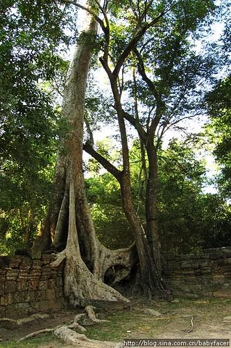 BKK_Angkor 700