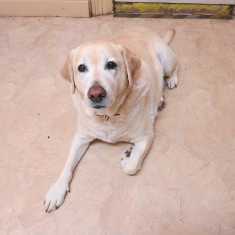 Oscar (2)