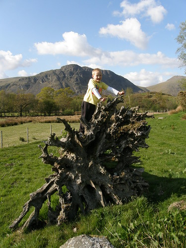 Another tree root. Buckbarrow behind.