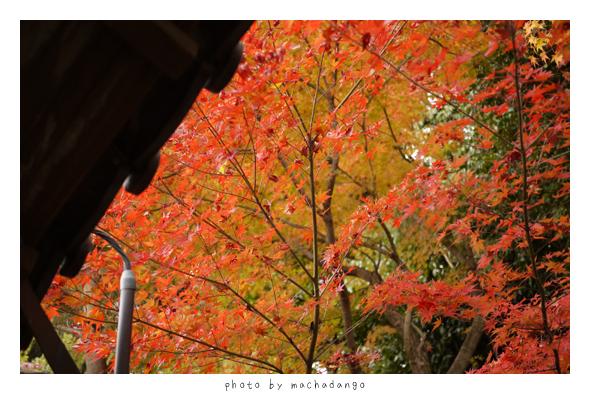 一旁的紅葉