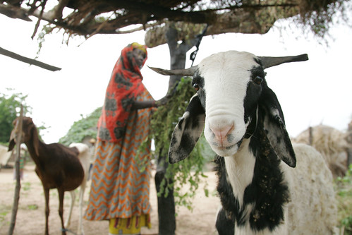Village woman and her sheep in Niger