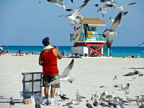 Bird feeder on South Beach