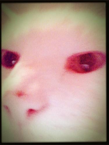 Evil Cat is Evil