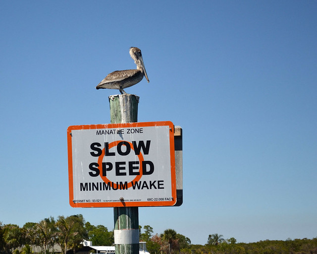 Slow Speed