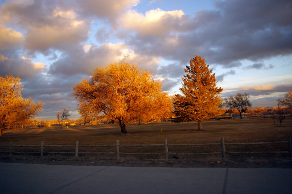 sunset light on trees