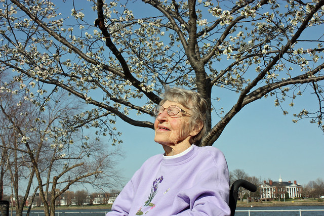 Grandmom and the Cherry Blossoms