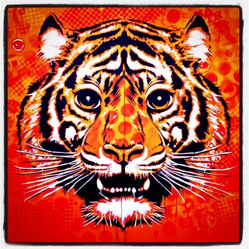 Tiger Eyez!