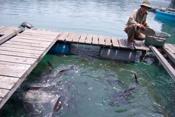 Besuch Pangasius Fischzucht 22