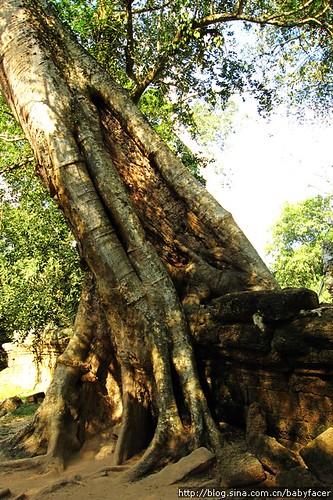 BKK_Angkor 687