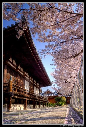 Temple @ Amagasaki 長遠寺