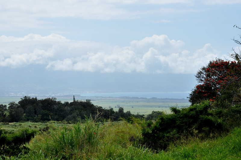 Upcountry Maui