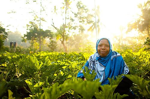 Female farmers in the Uwamwima Growers Association in Zanzibar,