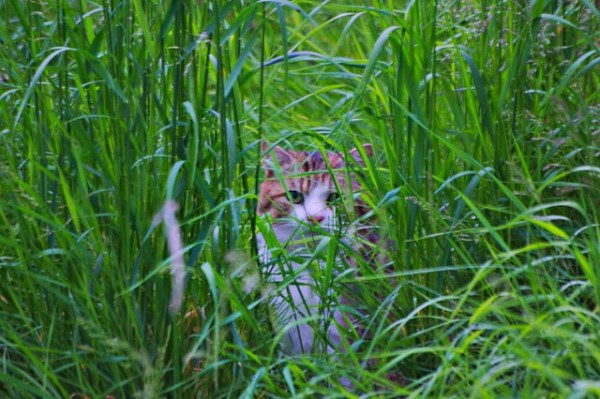 Lili cachée dans l'herbe