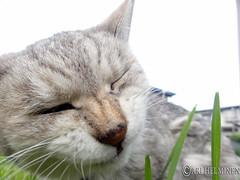 Chibi, grass hunting