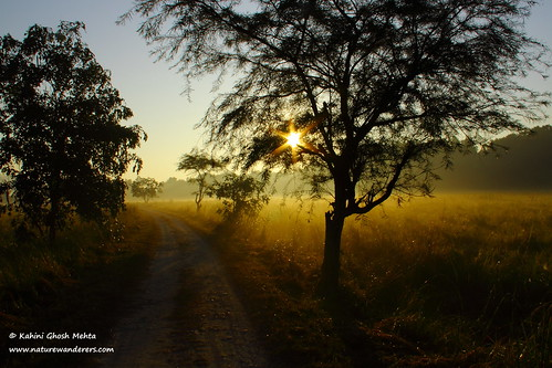 Winter morning - Corbett