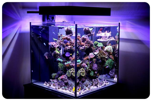 Reef Led Lighting