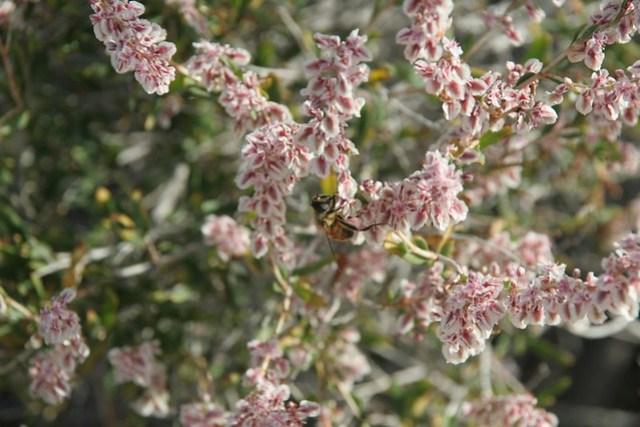 Flowers with bee, near Tamga
