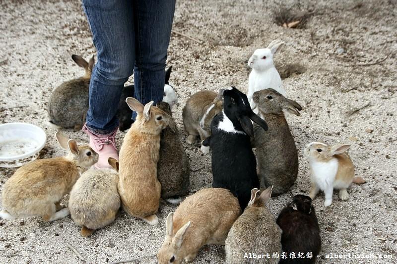廣島必遊景點.廣島、宮島、兔子島(一次體驗三大奇景)