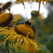 Bees in the Botanics