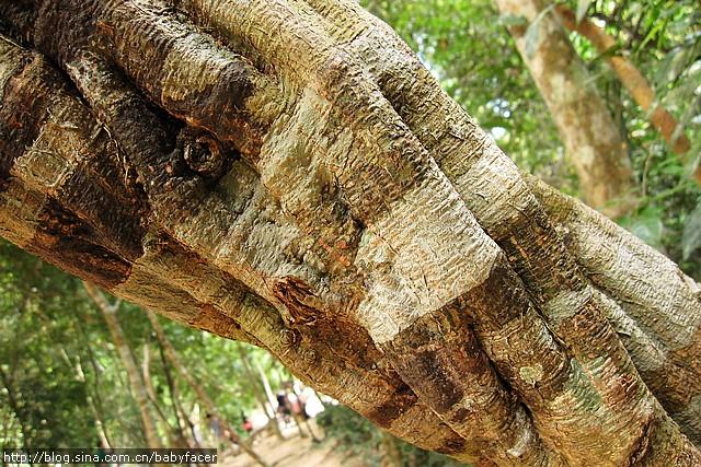 BKK_Angkor 1157