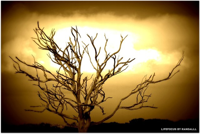 i was just so fascinated with this bare tree as a subject