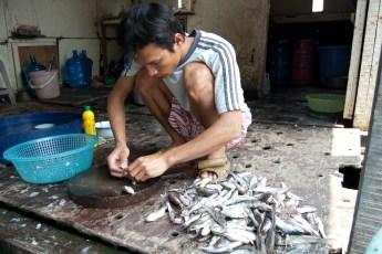 Besuch Pangasius Fischzucht 13