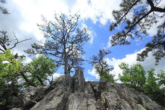 20140523_Seneca Rocks_091