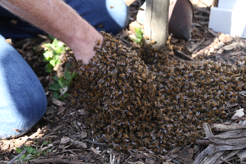 2012 Bee Work Day