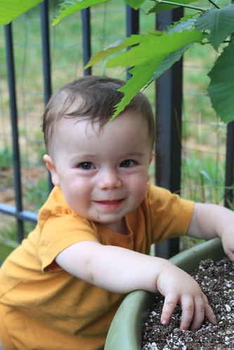 American Chestnut's 2nd Birthday - Sagan Smiles by Pot