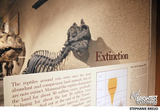 Smithsonian Dinosaur Exhibit Photos Brightest Young Things Stephanie Breijo13