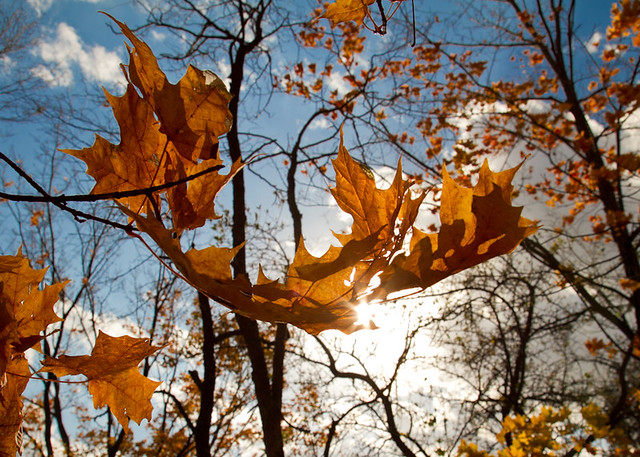 Fall Leaves Blowing