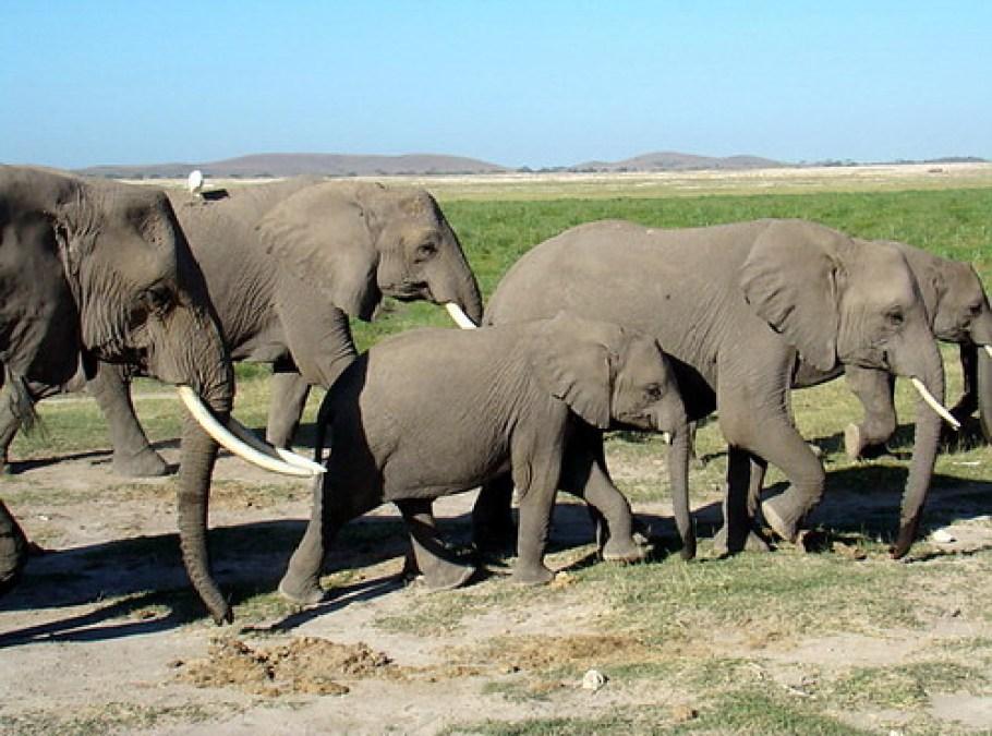 Parque Nacional Amboseli animales Kilimanjaro Kenia 04