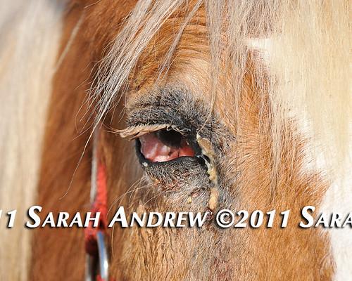 Tristan's eye