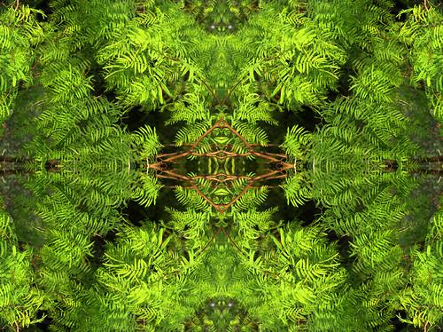 Botanical Dimensions by Jason A. Samfield