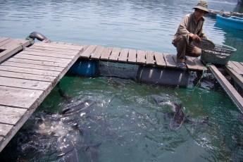Besuch Pangasius Fischzucht 21