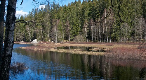 Calm waters of Nättrabyån