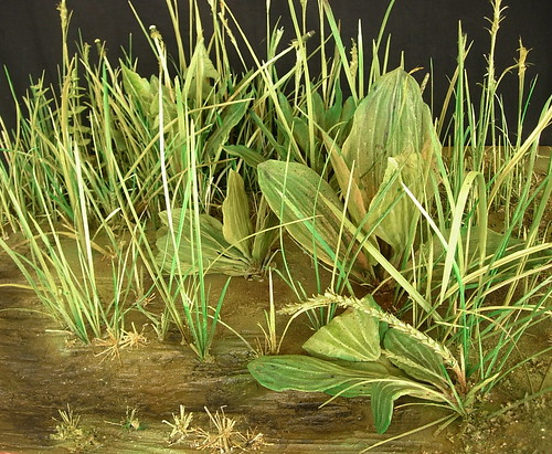 Dürer's Turf  2010. 41 x 76.5 x 60.5 cms. Carved wood with acrylic paint. This work is an attempt to transcribe Albrecht Dürer's 1503 watercolour The Large Turf into three dimensions. The grass depicted probably grew somewhere near his home in Nuremburg.