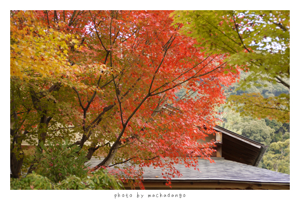 湖月庵前的紅葉
