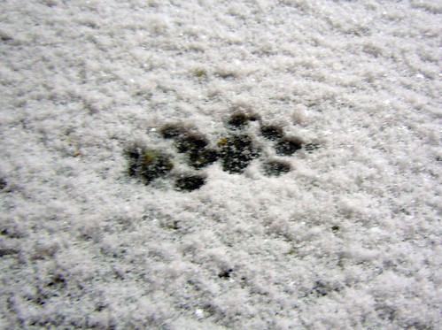 snowprintsN1569