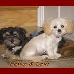 Lewa and Lexi