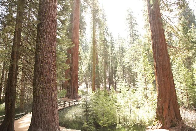 Mariposa Grove