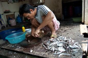 Besuch Pangasius Fischzucht 14
