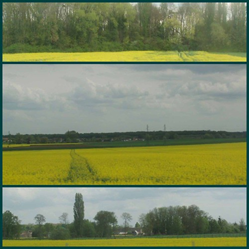 page-yellow-rape-fields